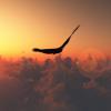 v-ray-Sun