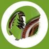 drew_tree