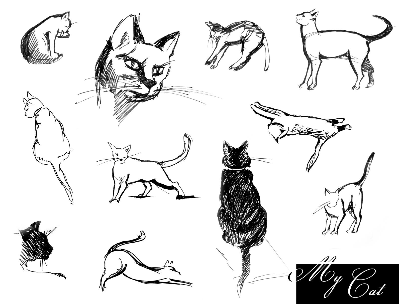 Кошки рисунок академический