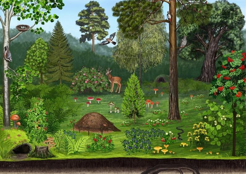 Рисунки в гостях у леса