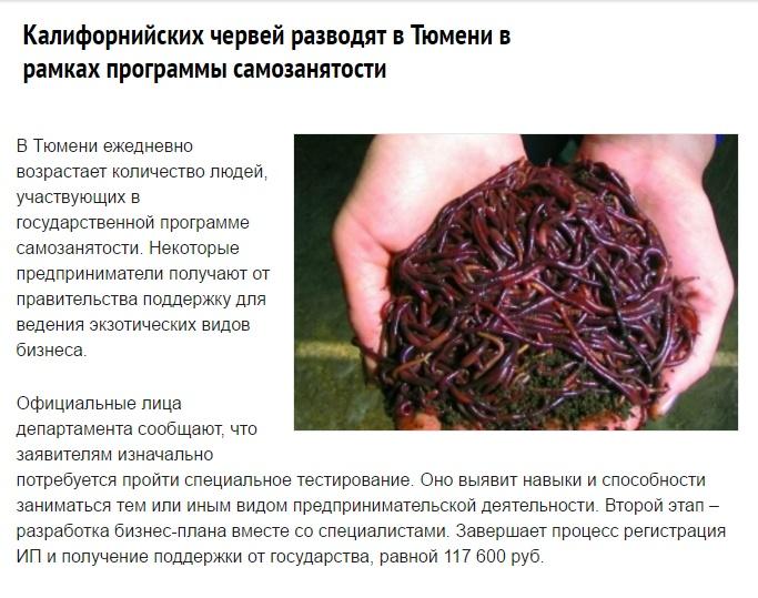 Бизнес на червях в домашних условиях